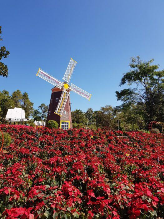 สวนดอกไม้ทางขึ้นภูเรือ (3)
