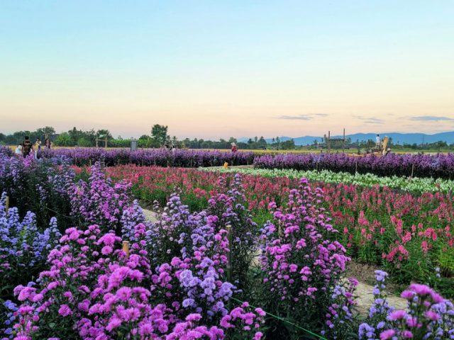 [18-21 Nov 2020] ไปหาออย-พี่สาวิตร | พัก U Chiangmai | สวนดอกไม้-คุ้มเสือ @เชียงใหม่